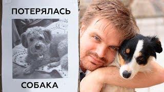 5 Потерянных Собак, Которые Нашлись Через Много Лет!