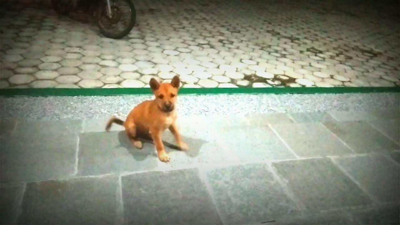 Anjing Lucu Kecil