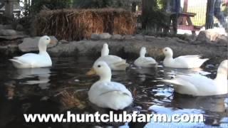 Hunt Club Farm  Virginia Beach VA