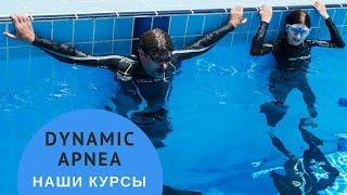 Подводное плавание: как выглядит тренировка динамики? Ласты, моноласта, брасс.