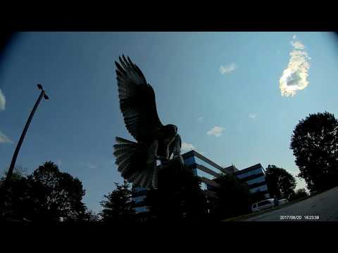 FPV close encounters with a drone-hungry hawk