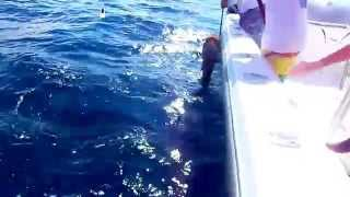Kevin and BJ hook and catch the biggest Grouper ever caught by Captain Kevin McKeon!!