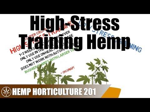How To High-Stress Train Hemp
