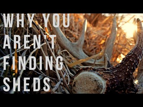 Why You Aren't Finding Sheds