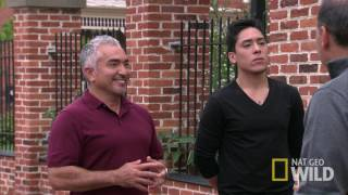 Cesar Millan's Dog Nation: Washington D.C.