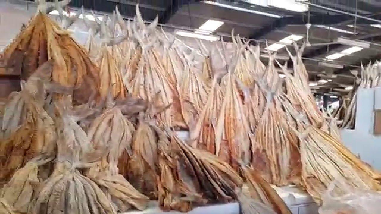 Dry fish dubai fish market youtube for Hagen s fish market