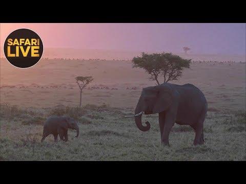 safariLIVE- Sunset Safari - September 25, 2018