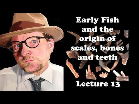 Lecture 13 Early Fish And The Origin Of Bone, Scales And Teeth