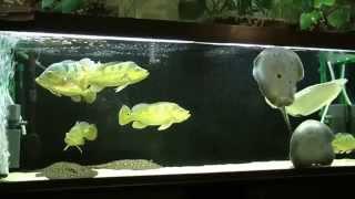 Интерактивный аквариумный туризм №4(Рубрика, куда вы присылаете свое видео и описание аквариума, а мы делаем из этого выпуск. Тема для Заявок:..., 2014-07-27T19:22:32.000Z)