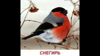 """Голоса птиц для детей. Развивалки """"Умный Ребенок"""""""