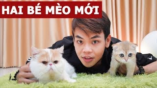 2 bé mèo mới siêu dễ thương ở kênh @The Happy Pets (Oops Banana Vlog #102)
