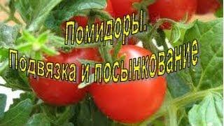 уход за помидорами с видео