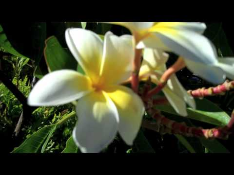 Flowers, Plants, & Fruit on Maui - Hawaii