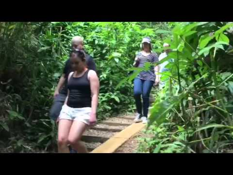 Manoa Falls hike. The entire trail at 4x.