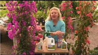 Bougainvillea Plant Care : Bougainvillea Pest Control Products