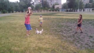 Удивительный пёс. Собака - футболист