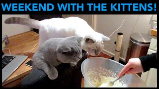 WEEKEND AT HOME WITH THE KITTENS | CHRIS & EVE
