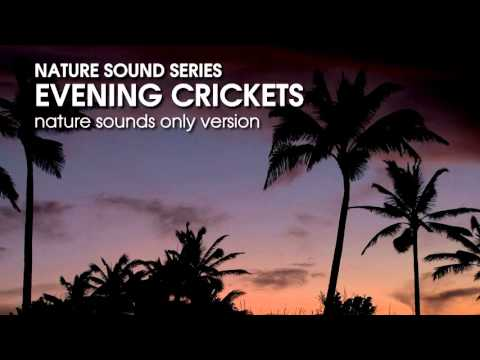 Evening Crickets - Nature Sounds Only version - 60 minutes relaxing, soothing sound of crickets
