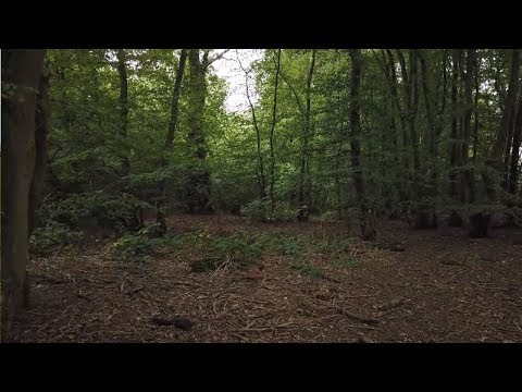 Camera captures strange apparition in the woods