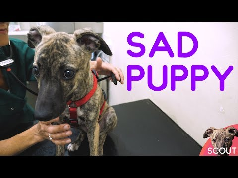 Scout is sad and needs the vet - Scout #004