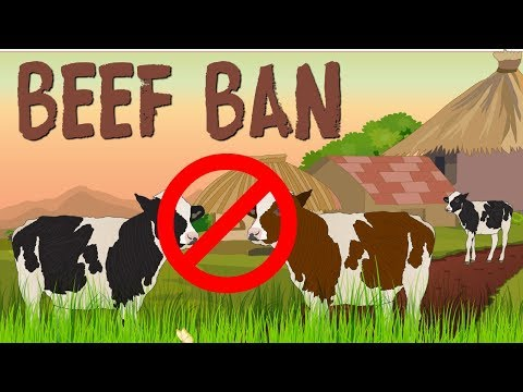 India's beef ban. How a badly implemented ban will pull down 'India Shining'.