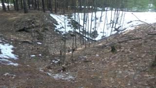 Прогулка по лесу! Блиндажи и окопы Харьковской области