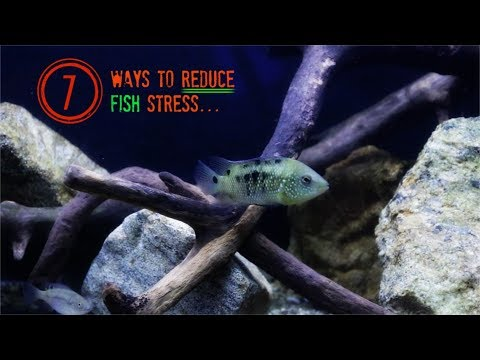7 Ways To Reduce Stress On Aquarium Fish