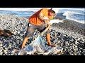 - Pescador con ATARRAYA Atrapa LISAS Grandes de PLAYA PEDREGOSA - Hechos captados en Vídeo
