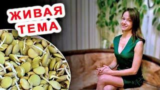 видео Как прорастить зеленую чечевицу для еды?