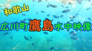和歌山県広川町 鷹島水中映像