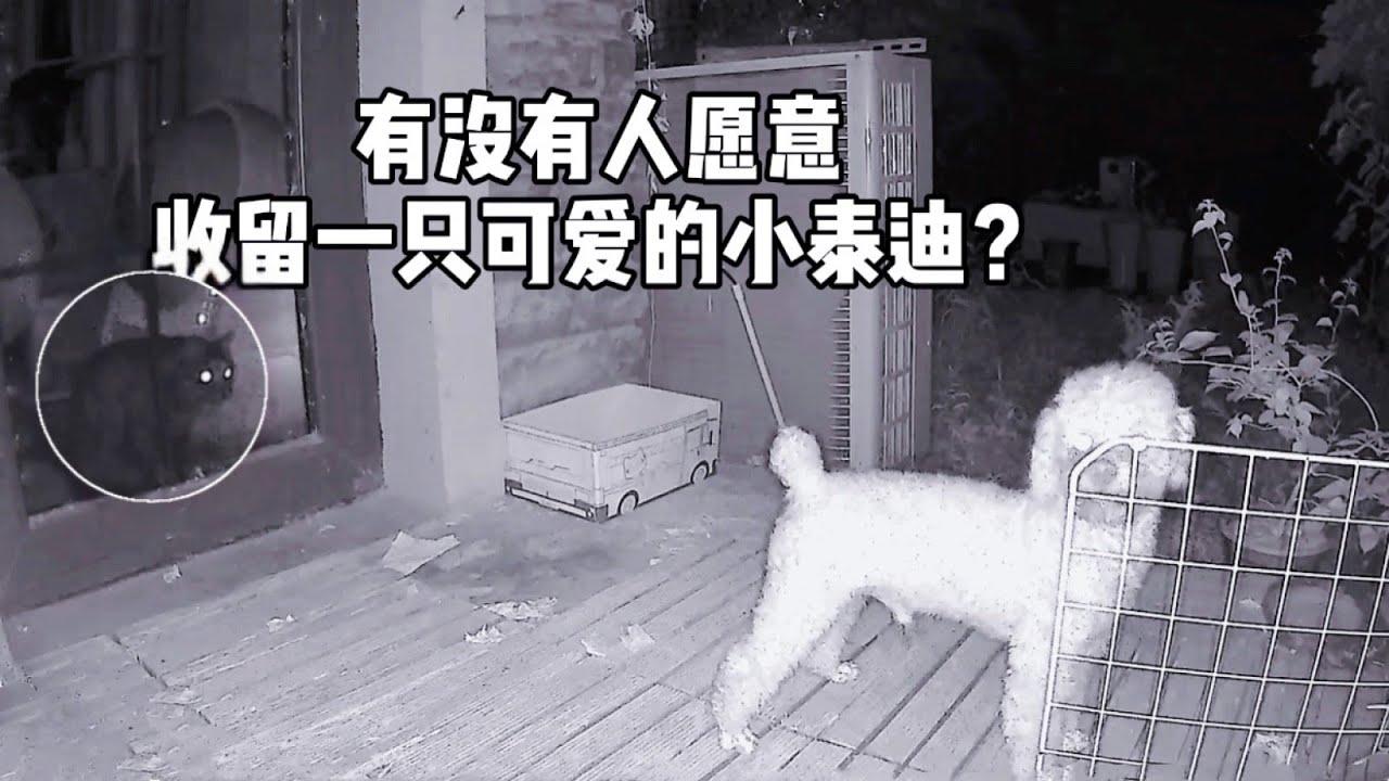 終於找到我家貓狗白天昏睡不醒的真實原因了,笑哭!| 李喜貓