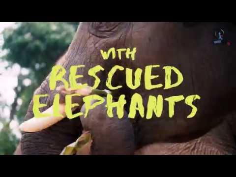 elephant-jungle-sanctuary-in-chiangmai-thailand