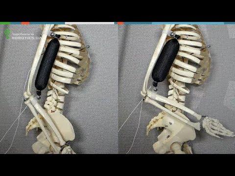Искусственная мышца для роботов (Robotics.ua)