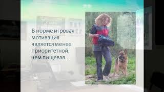 Мухамедшина И.А. Лекция на тему: «Мотивация во взаимоотношениях дрессировщика с собакой» (Часть 2).