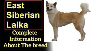 East Siberian Laika. Pros and Cons, Price, How to choose, Facts, Care, History