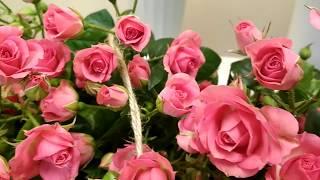 видео Доставка цветов Запорожье
