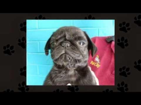 Pet City WA - Meet Our Puppies