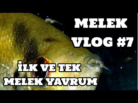 Melek Vlog #7 (İlk Ve Tek Melek Yavrum) [15.07.2017]