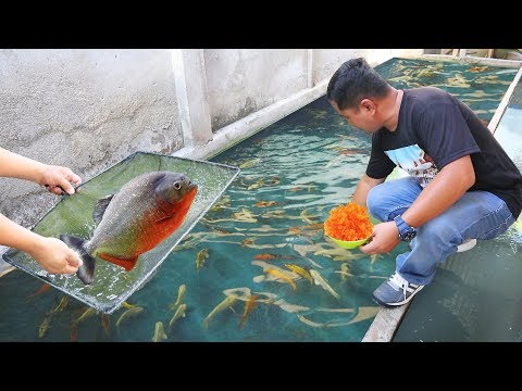 You Will Be Amazed How I Care And Grow My Fish Faster