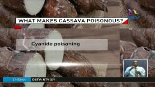 What makes cassava poisonous?