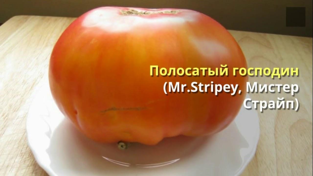 Трахнул курс высокоурожайное выращивание томатов весь огурец засунула
