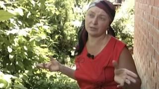 видео Актинидия – фото сортов, посадка и уход в открытом грунте