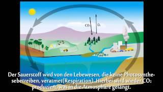 Kohlenstoffkreislauf Animation
