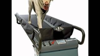 Dogtread Pz 1703k Large Dog Treadmill - With K9 Fitness Program