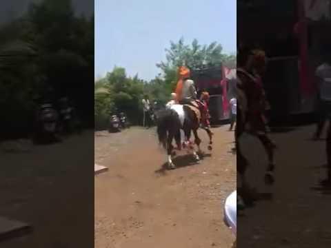 Saadi se baga horse