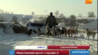 Алматинский приют для животных