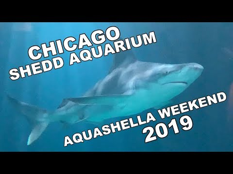 Shedd Aquarium, Chicago - Aquashella Weekend 2019