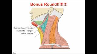 Neck Muscles - Anatomy Study Aid and Quiz