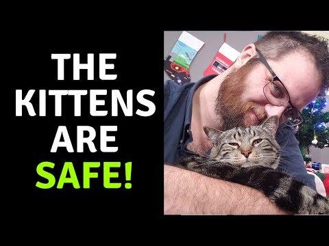 CAT MANIAC UPDATE