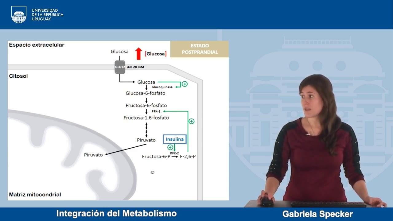 Estilo de vida con test metabolismo